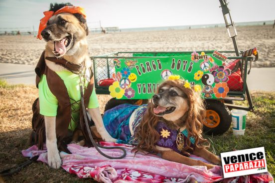 Venice Dog-O-Ween-106-L