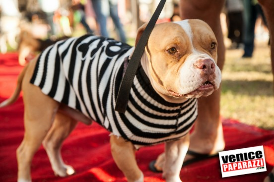 Venice Dog-O-Ween-77