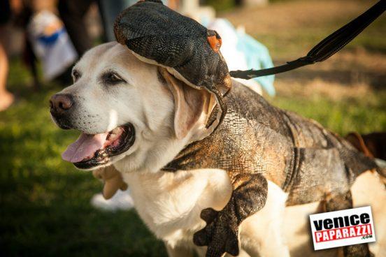 Venice Dog-O-Ween-122-L
