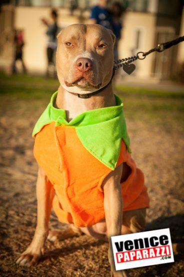 Venice Dog-O-Ween-158-L
