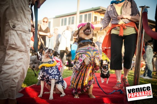 Venice Dog-O-Ween-163-L