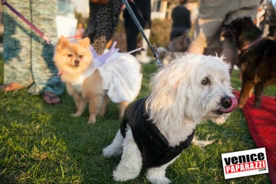 Venice Dog-O-Ween-177-L
